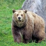 List Of The 8 Types Of Bears In The World