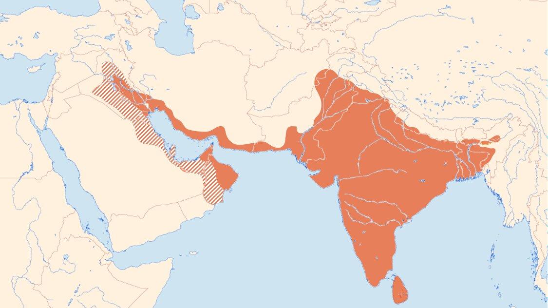 Indian Roller range
