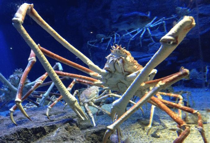 creepy animals in the ocean