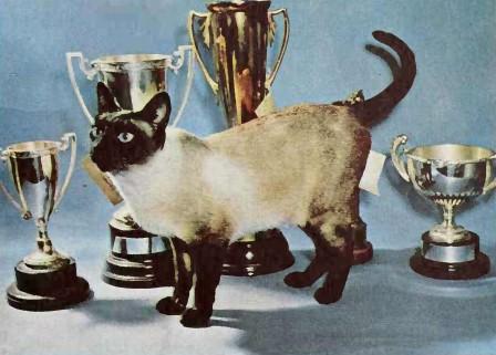 Siamese cat 1960s