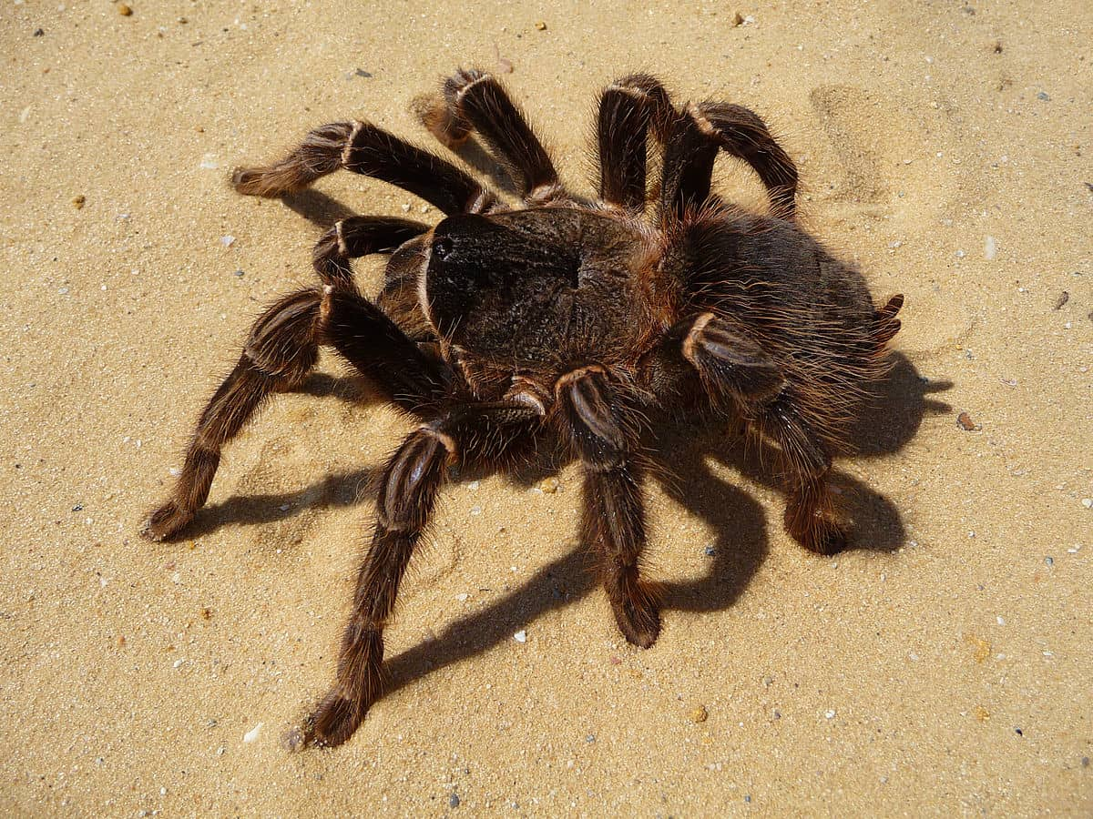 Top 7 Scariest Spiders In The World