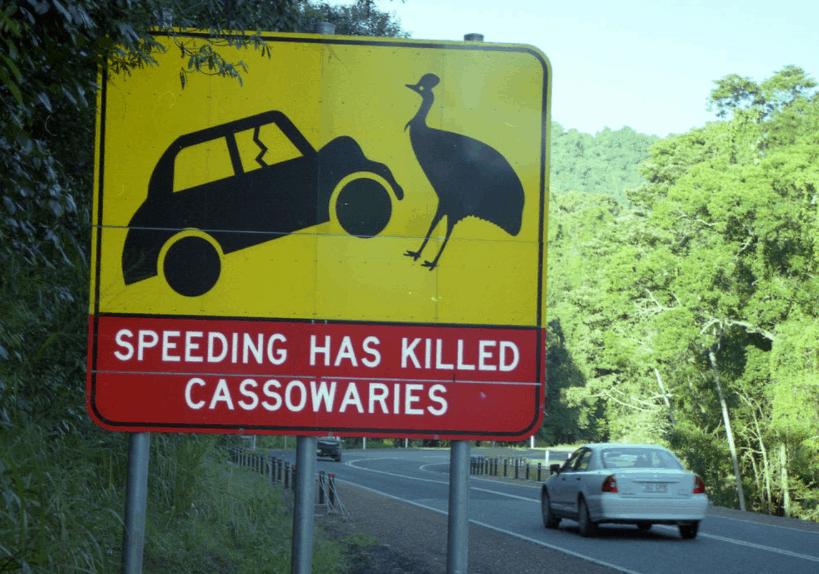 cassowary roadsign