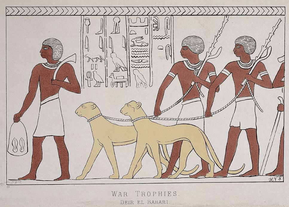 cheetahs in egypt