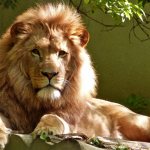 21 Roaring Facts About Lions