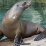 26 Interesting Facts About Sea Lions