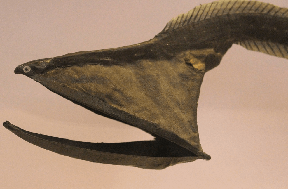 facts about the gulper eel