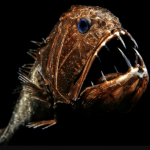 Top 10 Creepy Facts About Fangtooth Fish