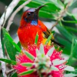 15 Fascinating Facts About Sunbirds