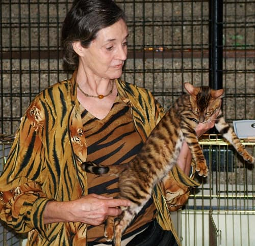 Judy Sugden with Toyger cat