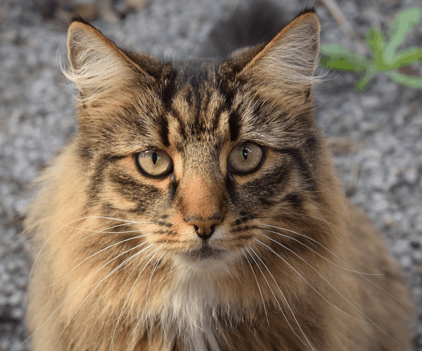 12 Most Beautiful Cats In The World