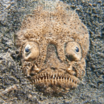 11 Creepy Facts About Stargazer Fish