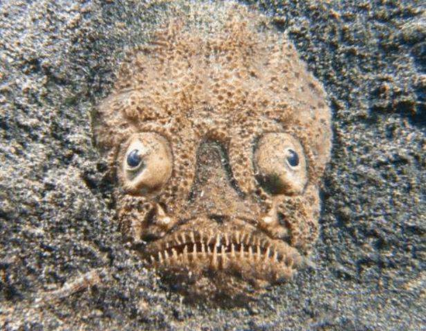 Stargazer in the sand