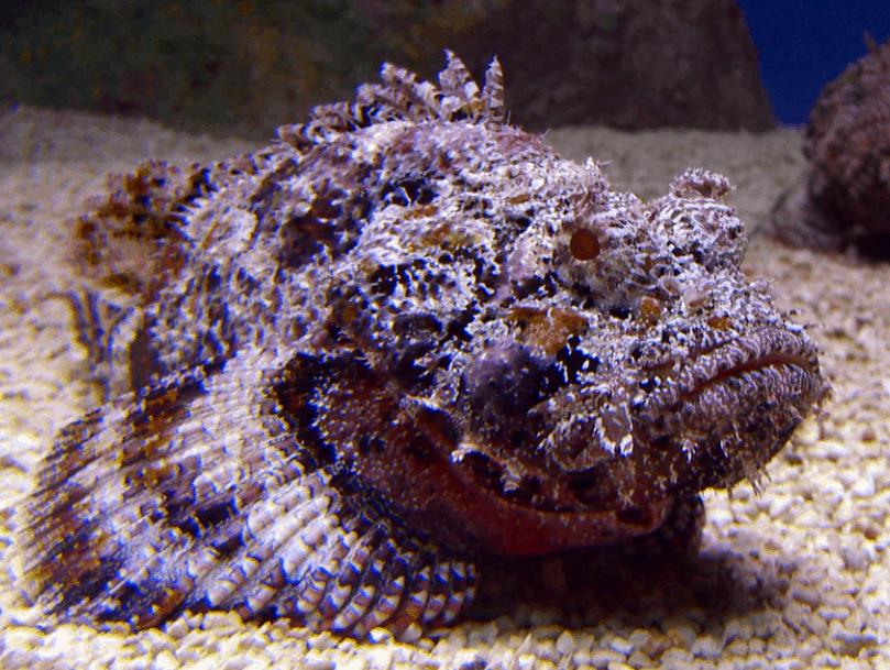 stonefish interesting facts