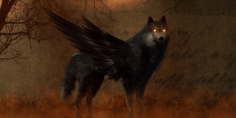wolf eyes in the dark