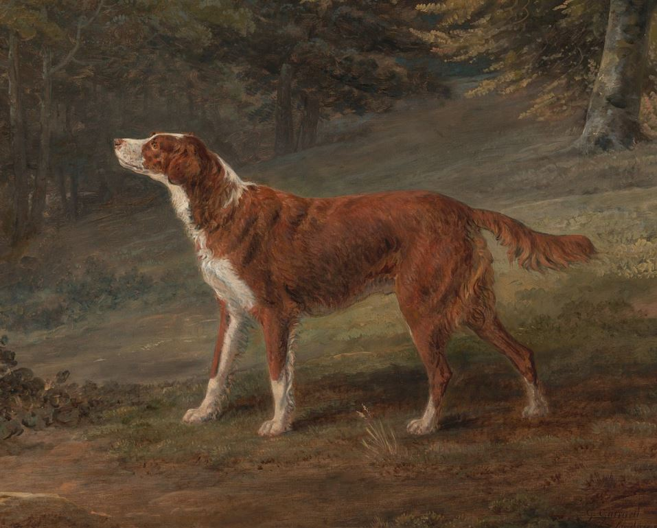 Red setter in 1797