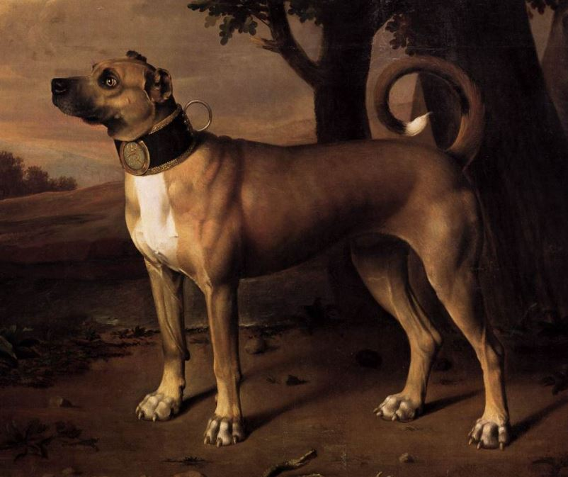 Great dane Germany 17th century