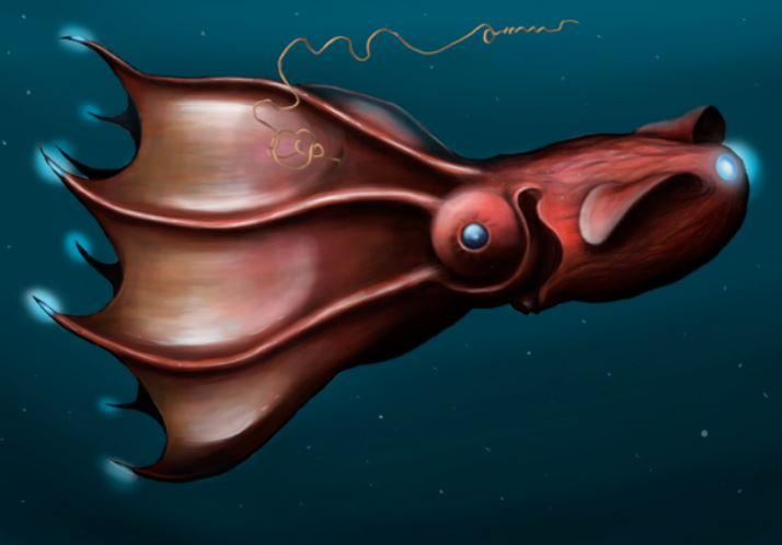 Vampire squid facts