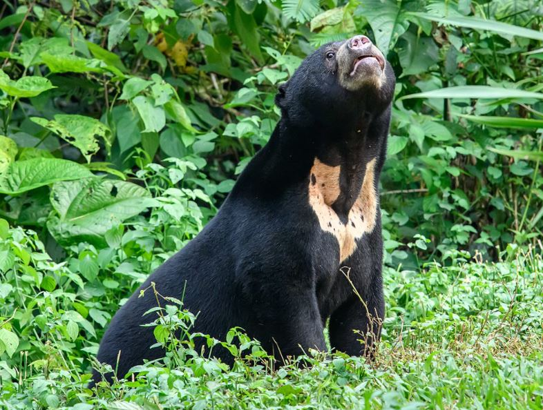 Why are they called sun bears