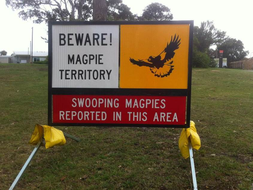 Magpie swooping sign