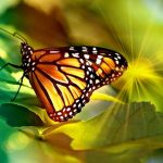 Most beautiful butterflies in the world